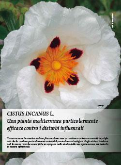 CISTUS INCANUS L.: una pianta mediterranea particolarmente efficace contro i disturbi influenzali