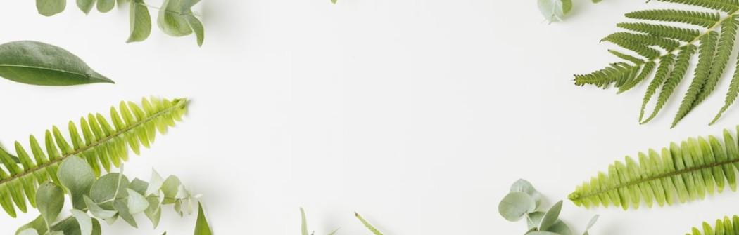 Le piante per contrastare la ritenzione idrica e depurare