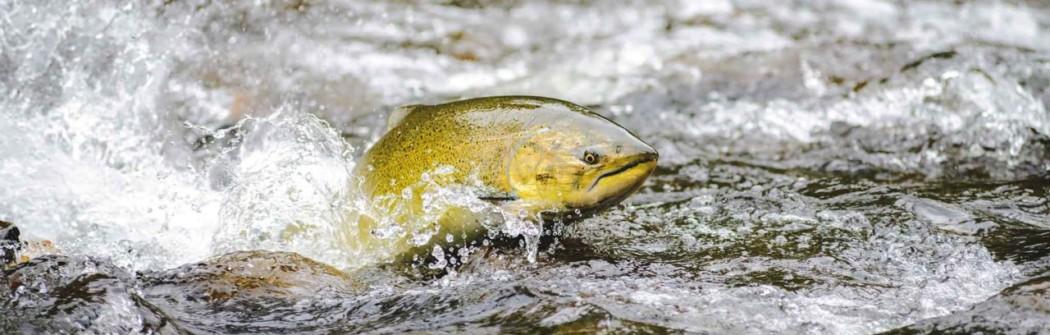 Dal pesce, Omega 3 per la salute di pelle, cuore e vista